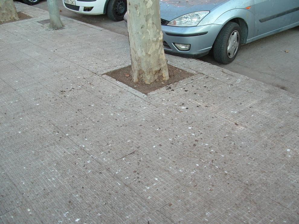 Restos de excrementos de ave en la calle Manuel Ángel Ferrer, muy cerca del parque Miguel Servet