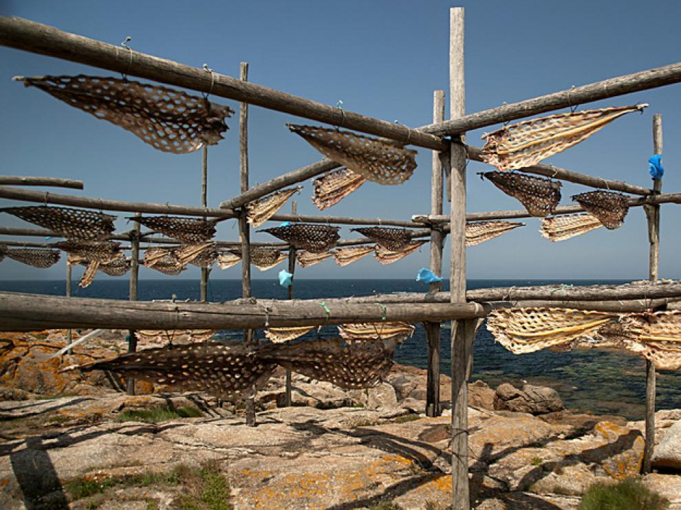 Secadero de congrios en Muxía (La Coruña)