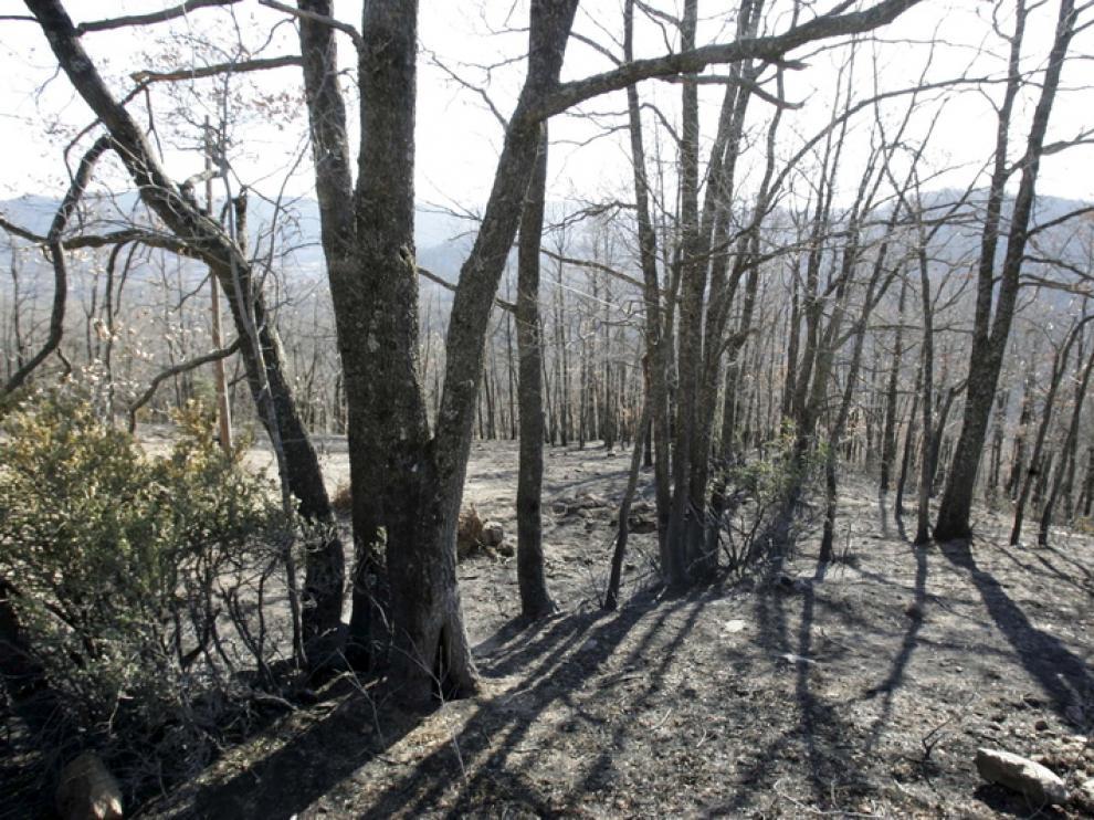 Monte afectado por las llamas