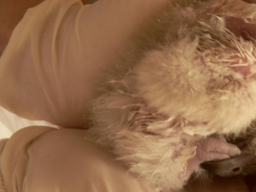 Imagen del nuevo pollo de Quebrantahuesos.
