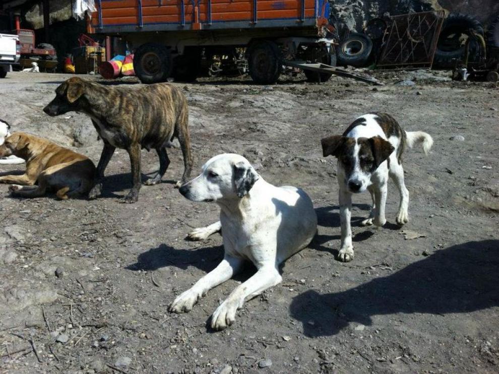 Medio centenar de perros vivían hacinados en una granja de Ricla