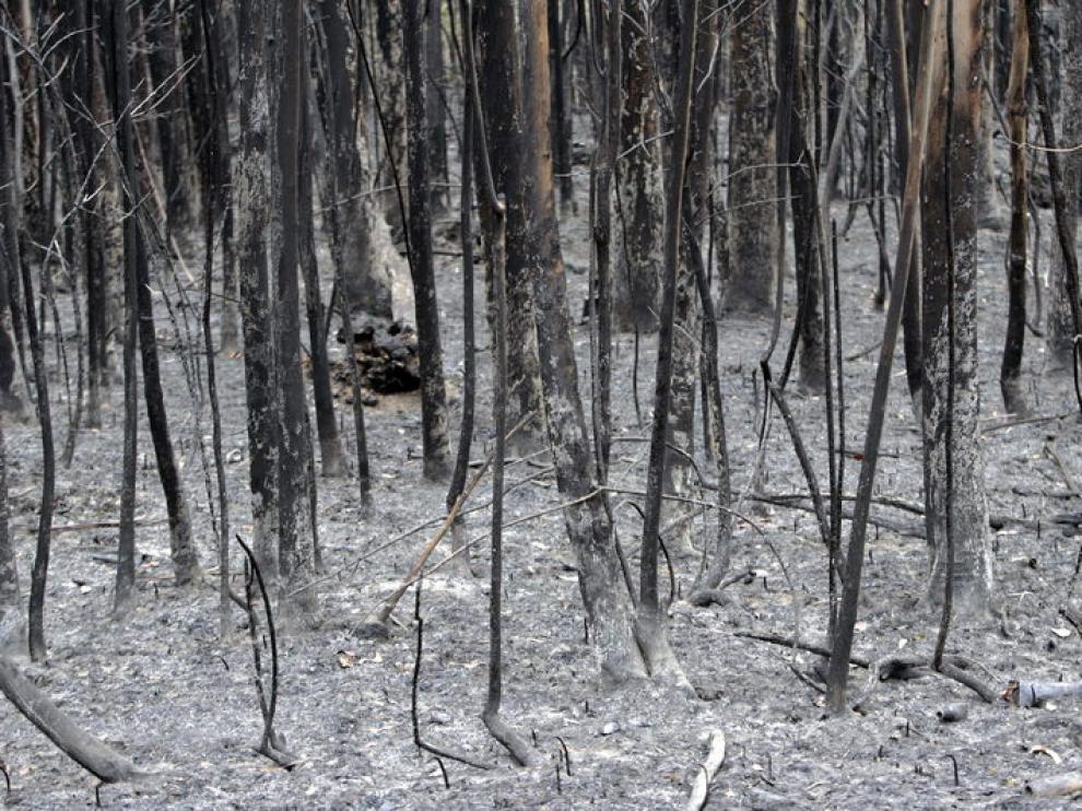 Así ha quedado la zona del incendio en Las Forcas