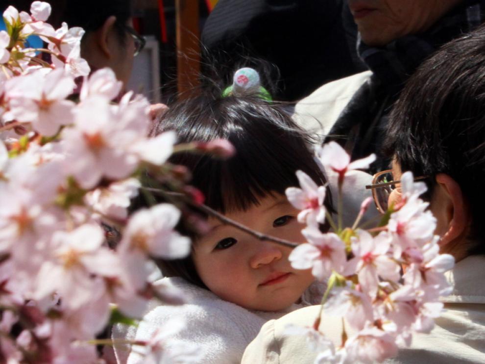 La floración de los cerezos es una auténtica fiesta