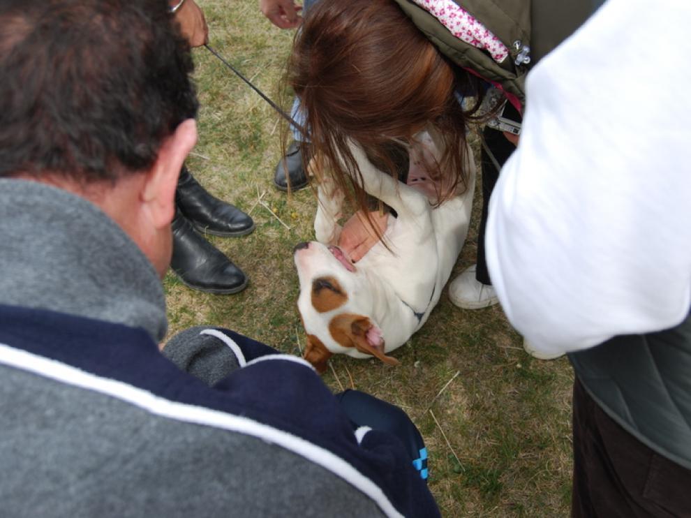 Un cachorro tumbado en el centro