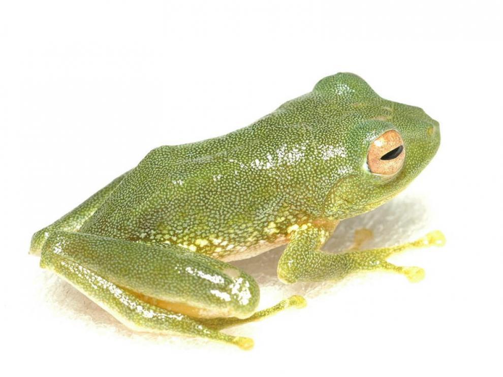 Una de las nuevas especies