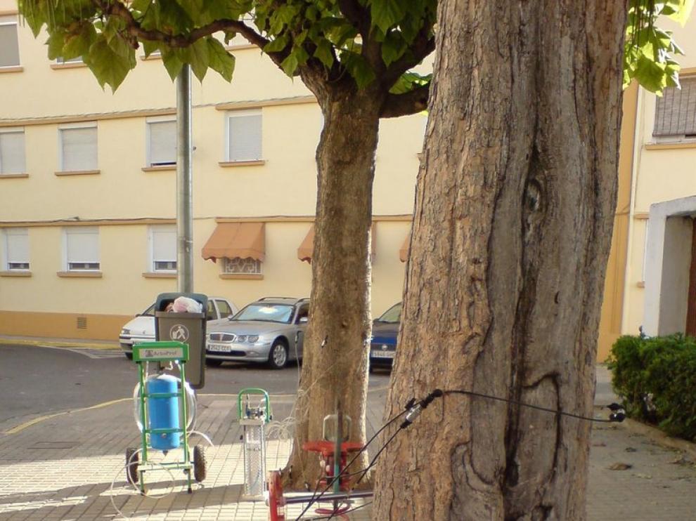 Tratamiento con endoterapia a un árbol de Monzón