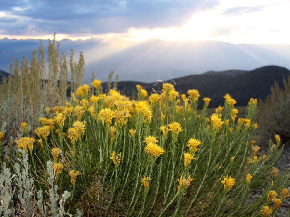 Las plantas adelantan su floración