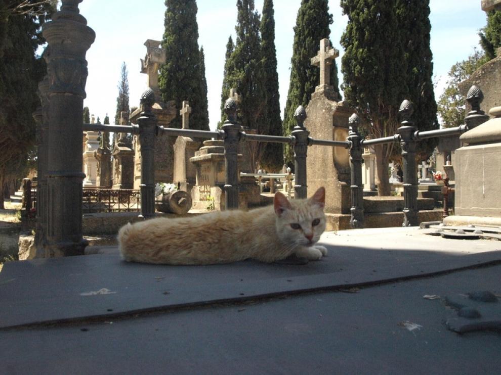 Un minino descansa plácidamente sobre una tumba.