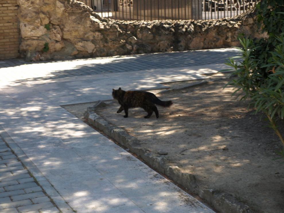 Teruel controlará sus colonias de gatos