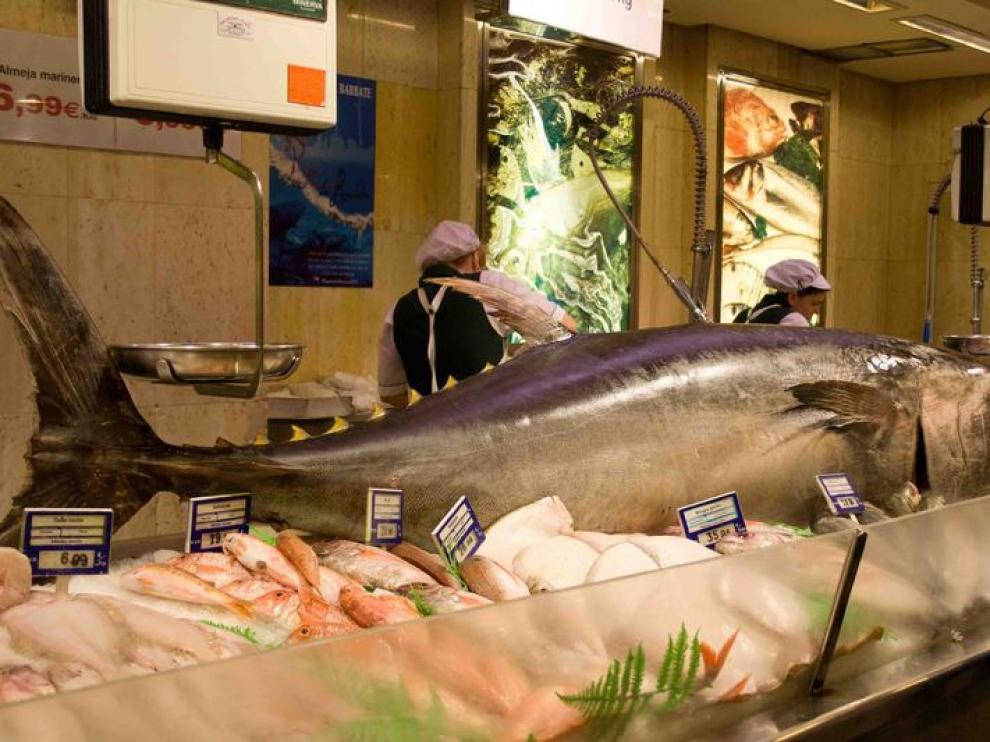 Un atún rojo de 337 kilos