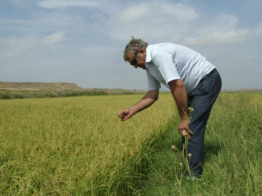 Un agricultor aragonés observa su cultivo