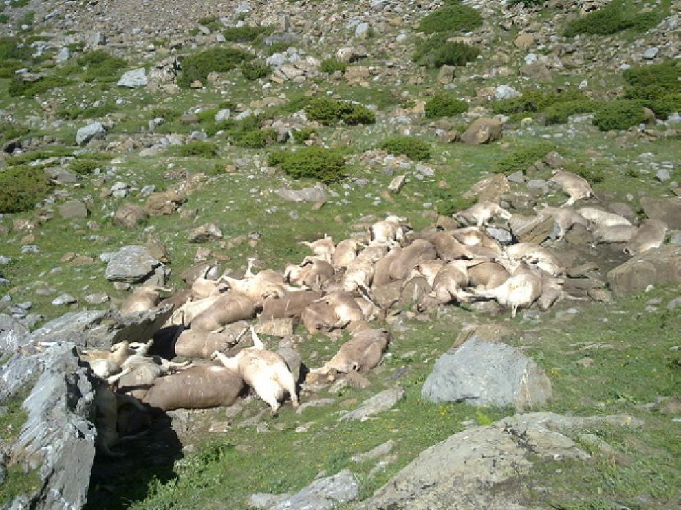 En junio, 61 vacas aparecieron despeñadas en Aragüés del Puerto