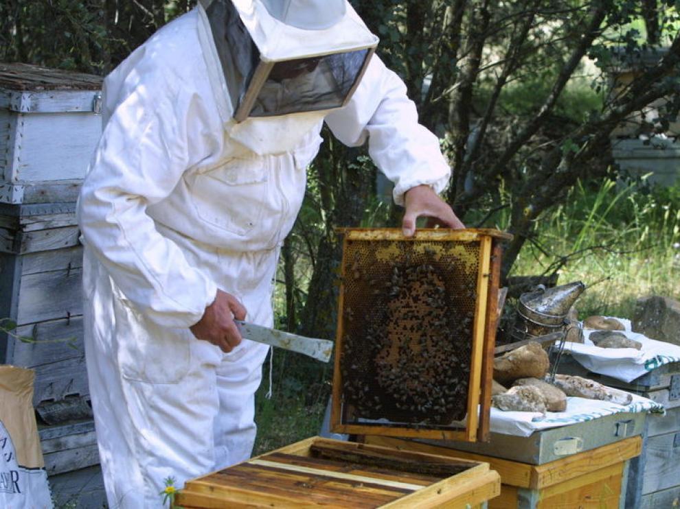 Un apicultor aragonés trabaja en sus colmenas
