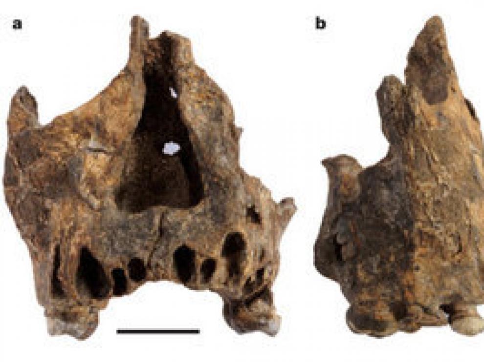 Distintas vistas de una de las piezas encontradas.