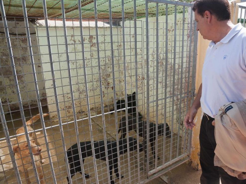 El CPA promueve nuevas campañas contra el abandono de animales