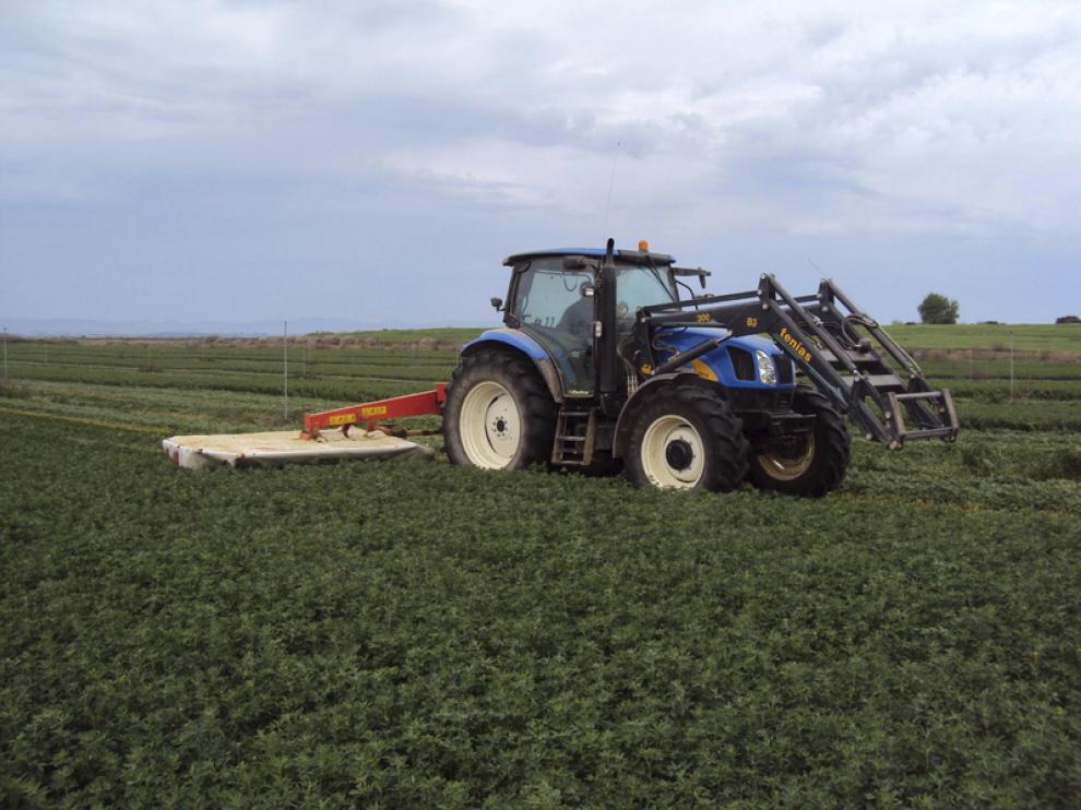 Campo de alfalfa en Grañén.