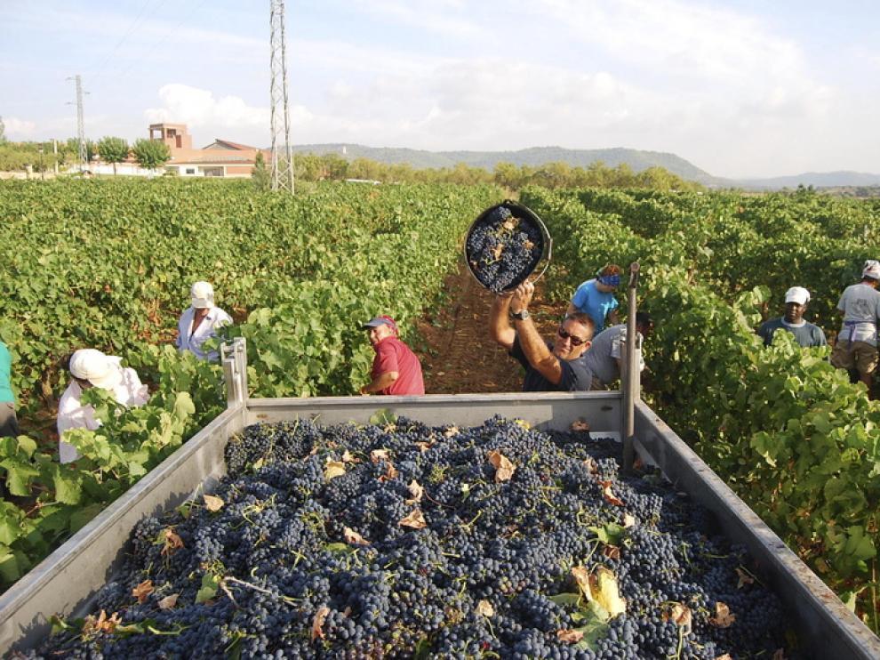 Imagen de la vendimia 2011 en Huesca