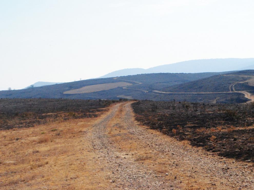 Terreno arrasado por el incendio de Calcena