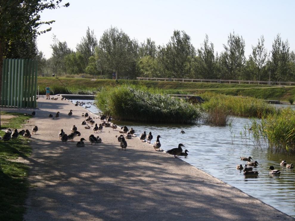 Los patos pueblan el parque 'Luis Buñuel'