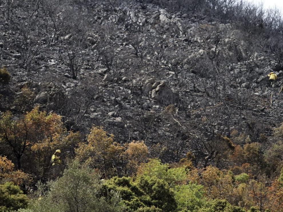 El fuego en la provincia de Málaga ha afectado a 5.000 hectáreas de bosque.