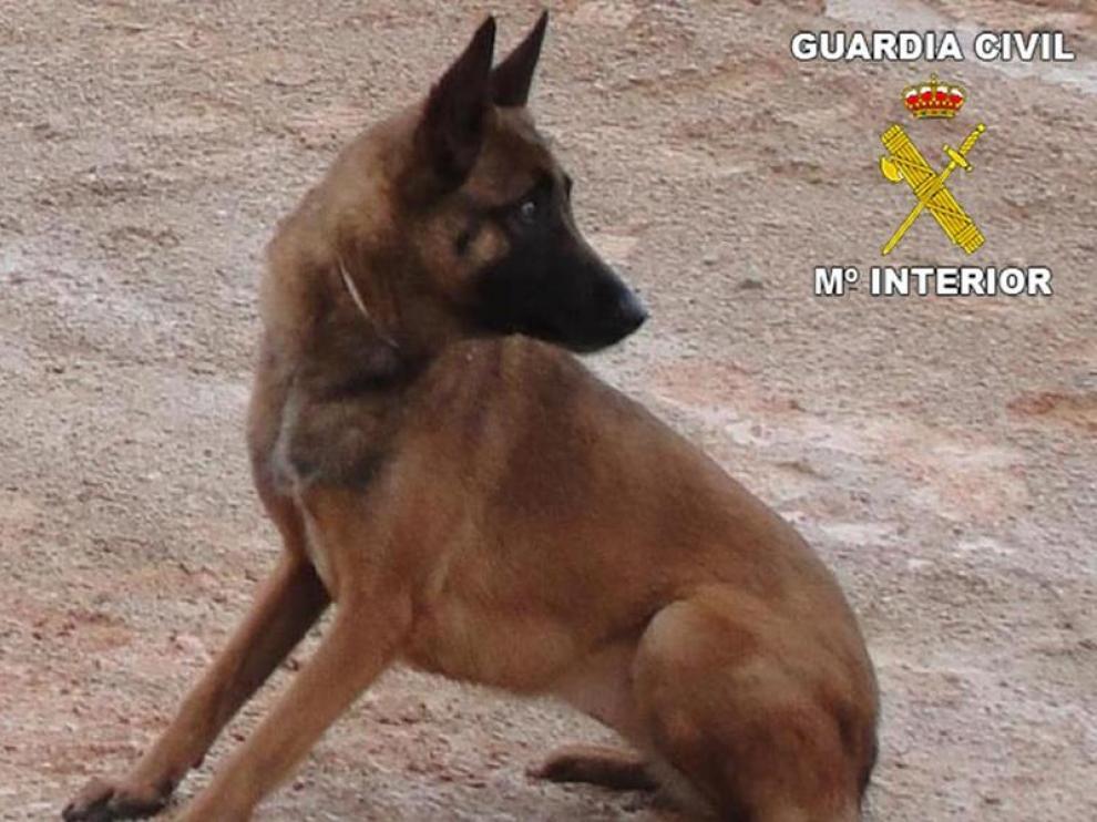 La perra de salvamento sustraída en dos ocasiones
