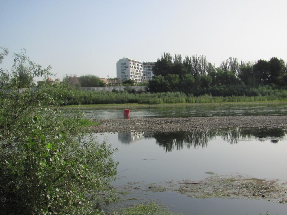La retirada de algas tenía como objetivo acabar con la mosca negra.