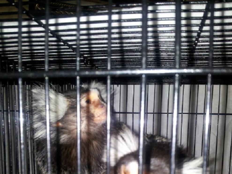 Los animales fueron incautados en el momento en el que los iba a recibir el comprador