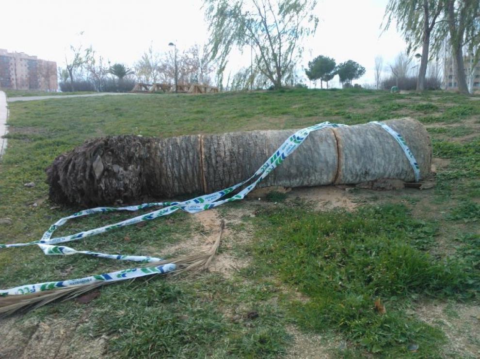 Muestra de árboles talados en Miralbueno
