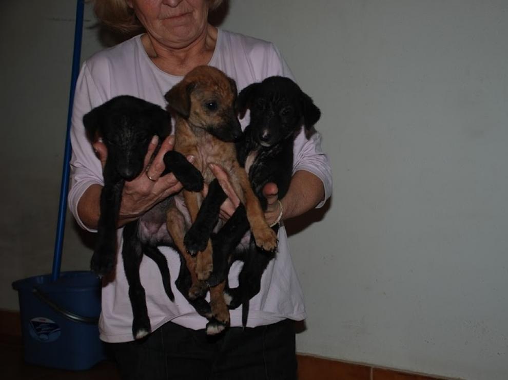Tres cachorros abandonados que fueron recogidos por la protectora ARMANTES.