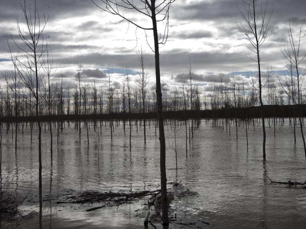 Imagenes de la crecida del Ebro en la Ribera Baja.