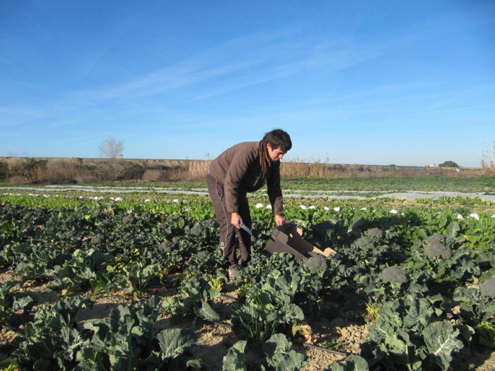 Un agricultor de Movera