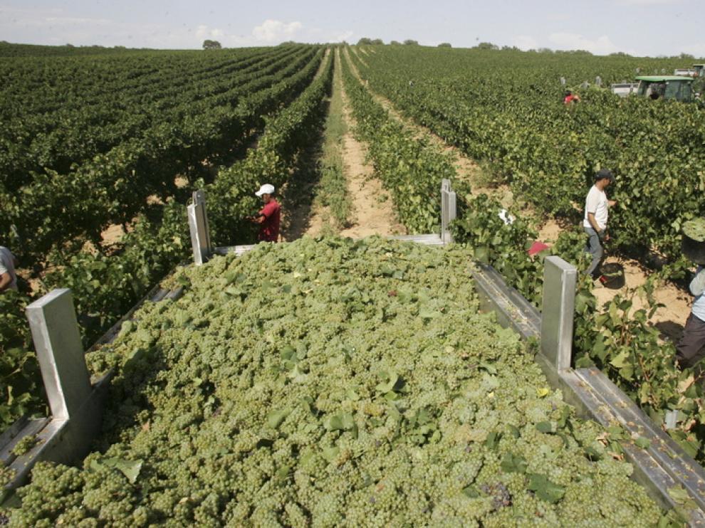 Aragón exportó en 2012 más de 18 millones en vino y otras bebidas a EE. UU.