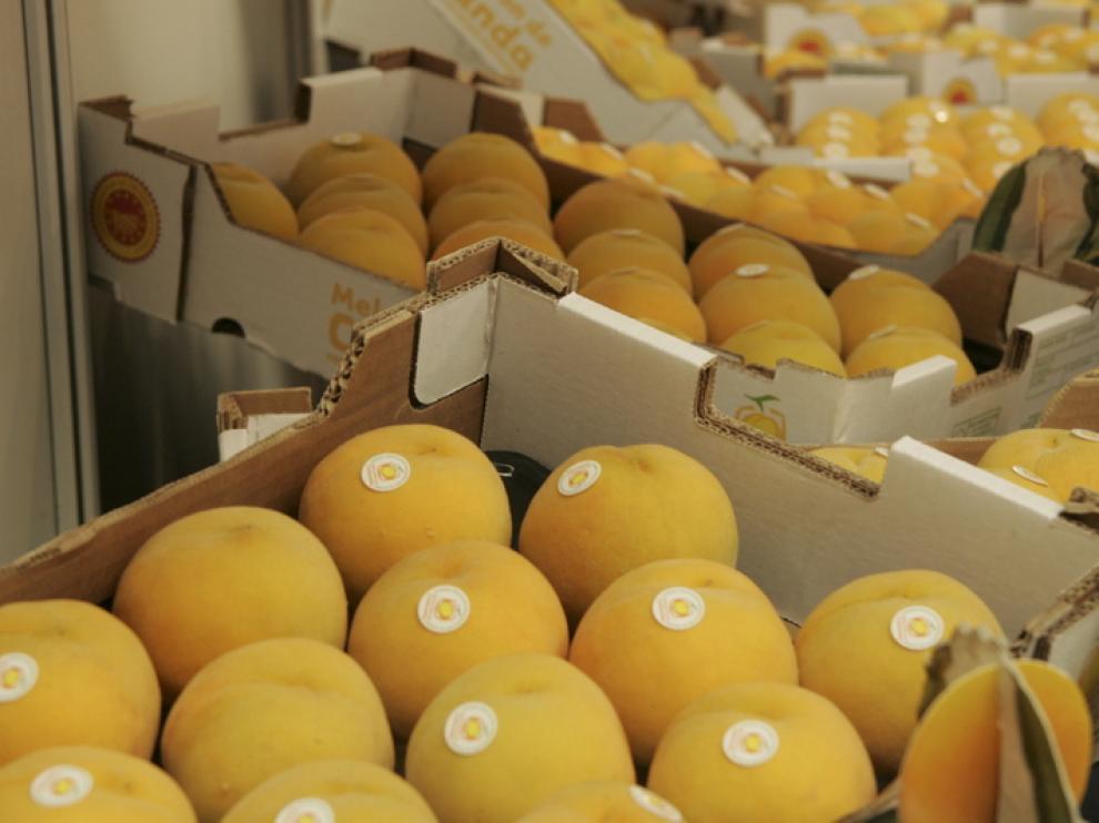 El Melocotón de Calanda se vende en Alemania, Italia y Portugal