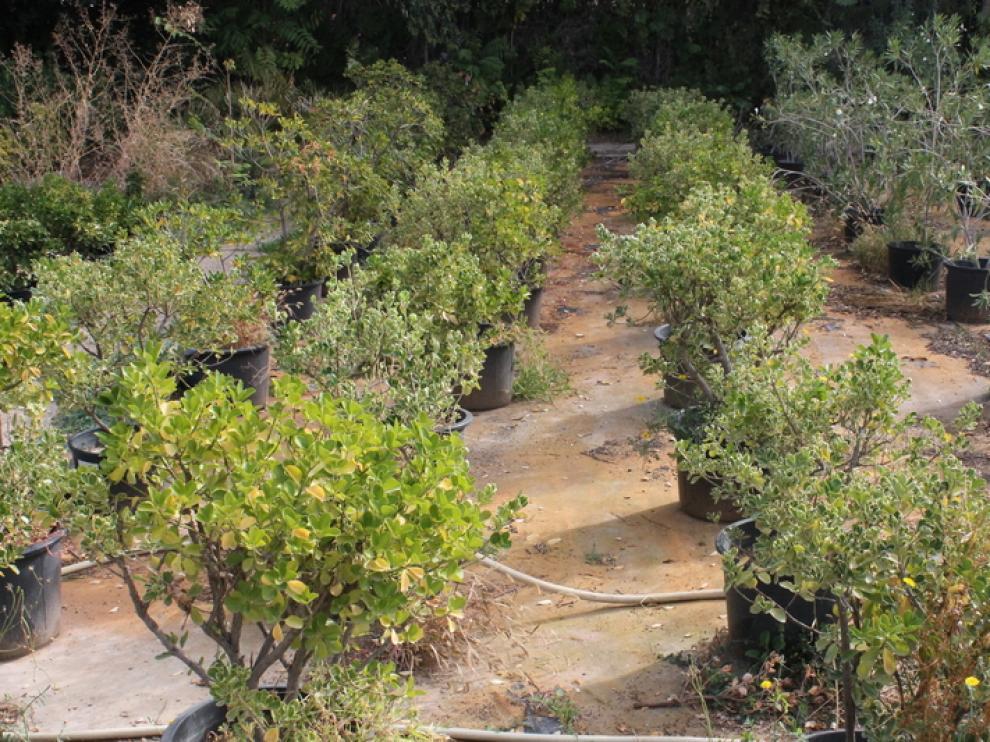 Este año el vivero provincial cuenta con unas existencias de 34.000 plantas.