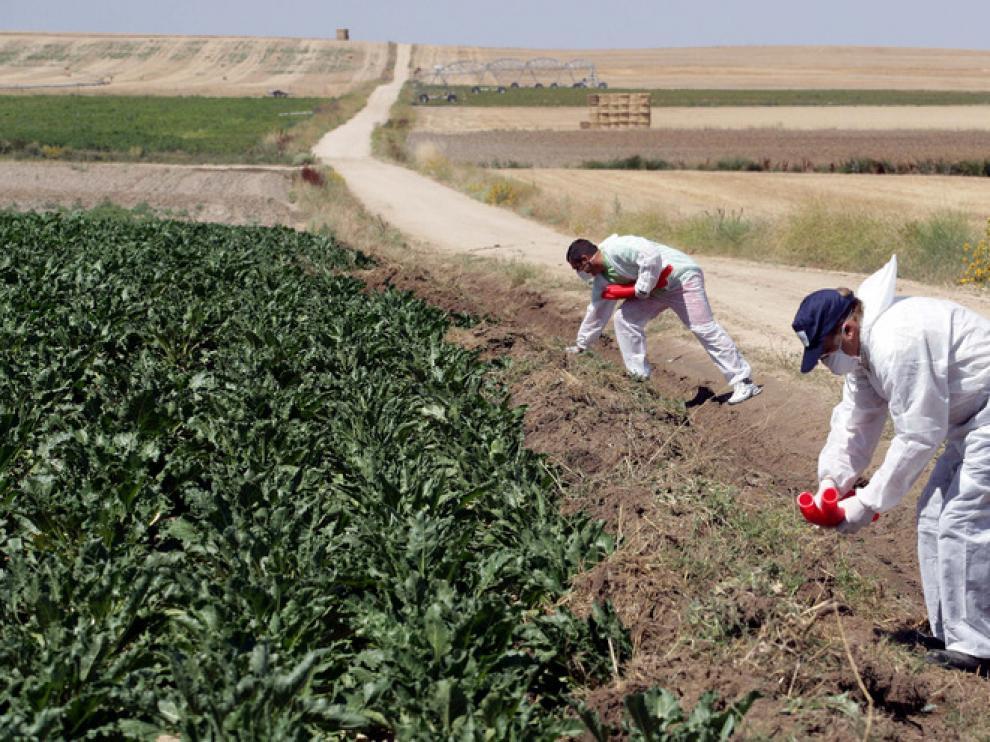 Unos agricultores oscenses.
