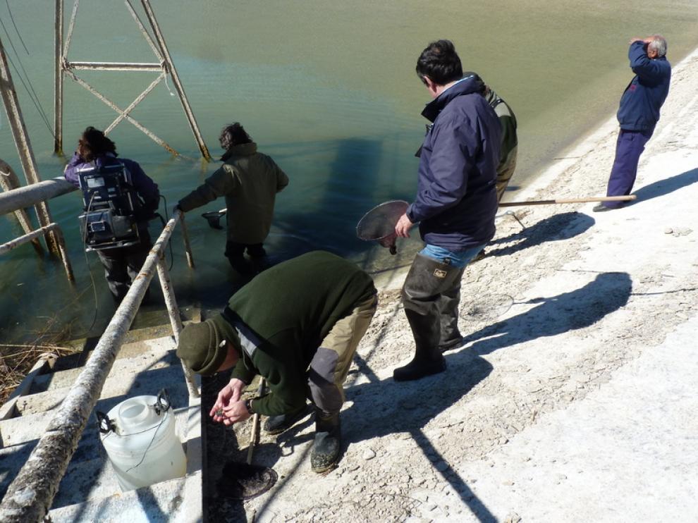 Rescate de los ejemplares de pez fraile