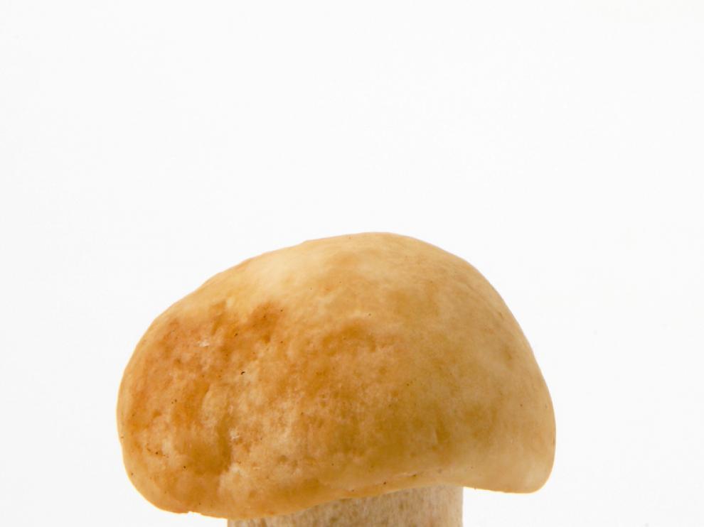 El perrechico es uno de los hongos que más tirón tiene en la cocina.