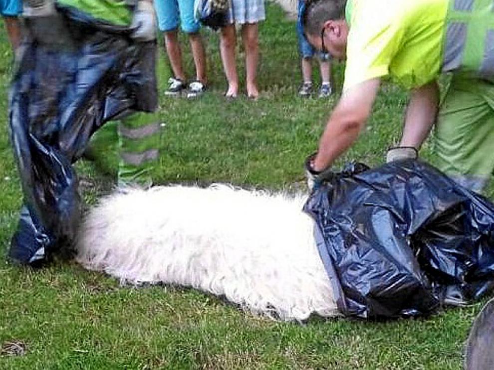 El perro, un mastín de 57 kilos, tras ser abatido