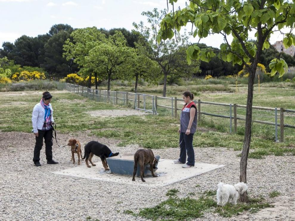 Parque de los Cineastas, donde pueden ir los perros sueltos