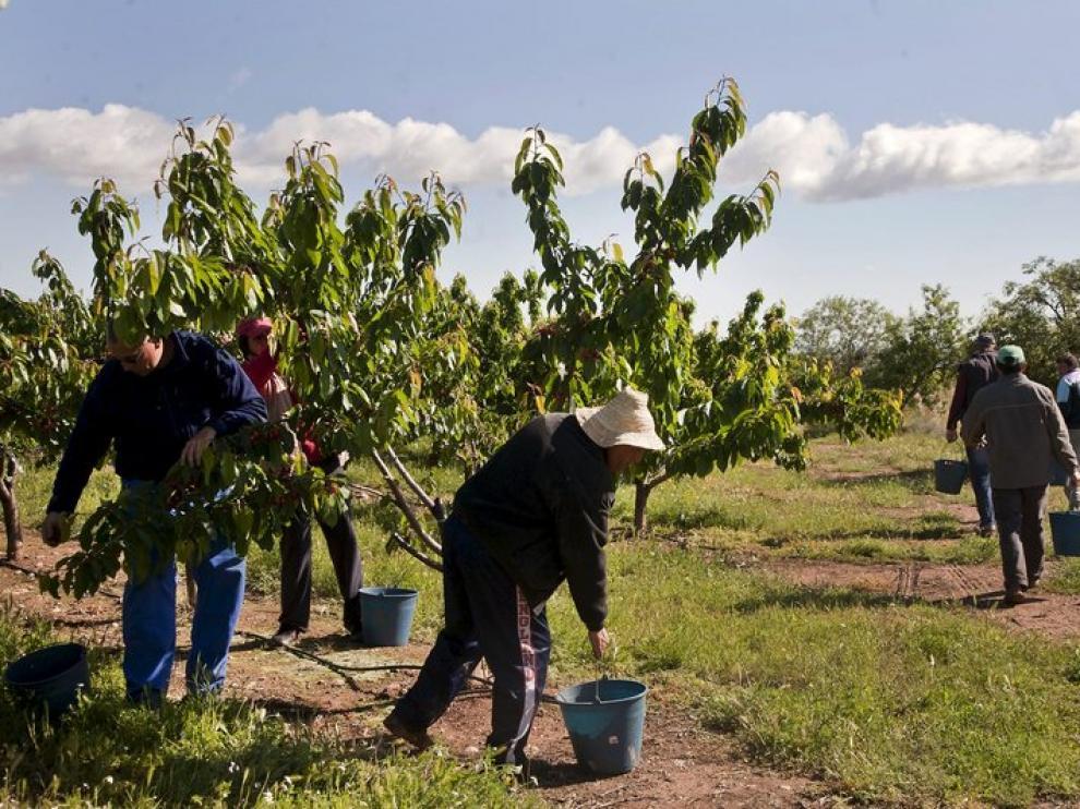 La agricultura es el sector que más empleo ha generado