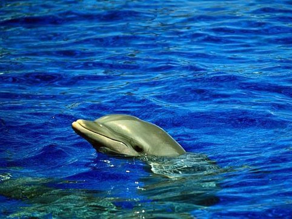 Un ejemplar de delfín