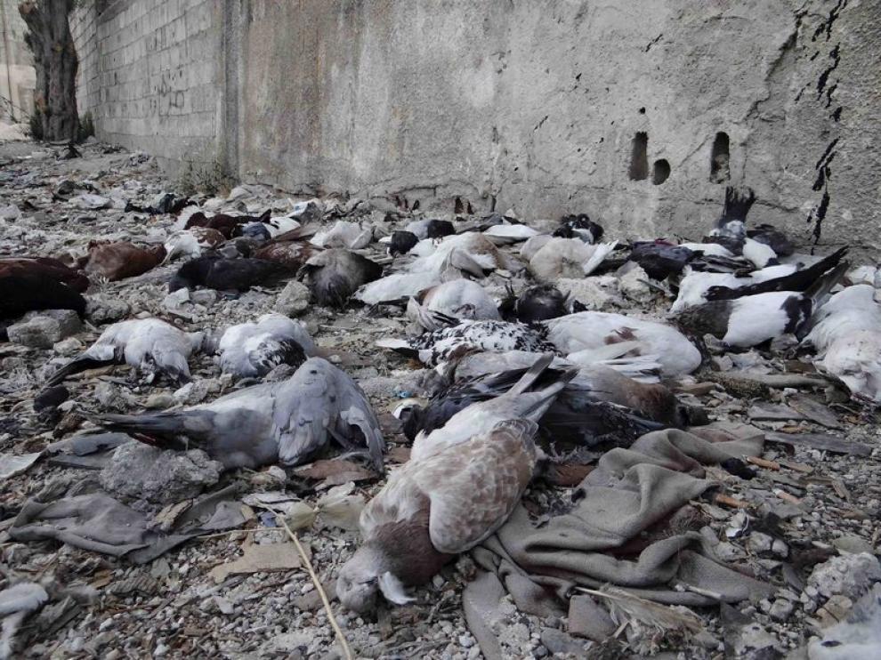 La oposición siria muestra decenas de aves muertas como prueba del ataque químico