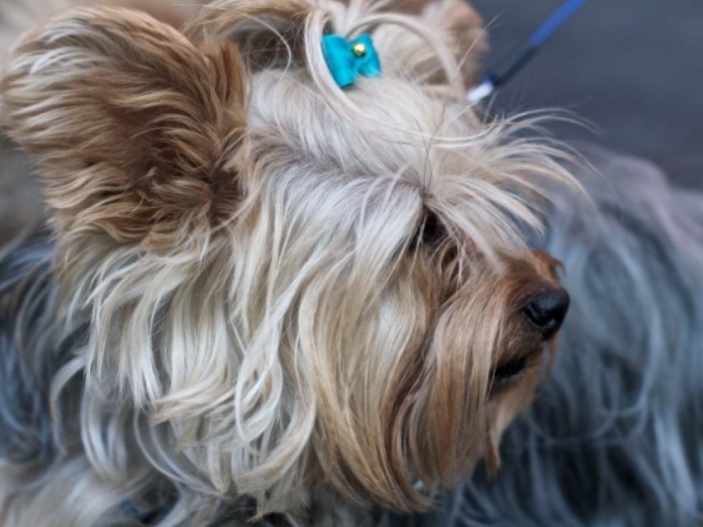 Primera quedada canina de Las Fuentes