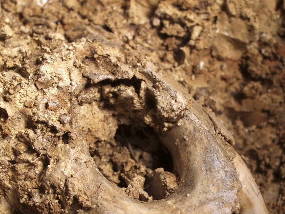 Fósiles de Ursus deningeris