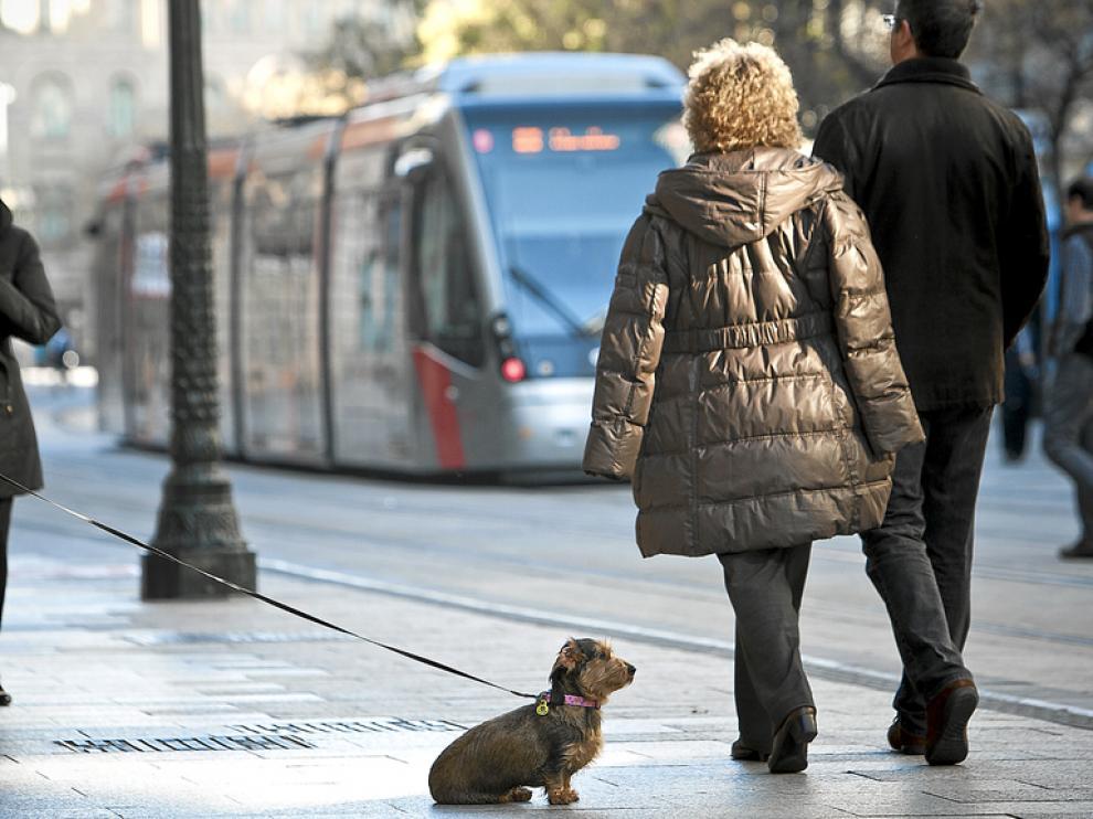 Las mascotas ya pueden subir al transporte público