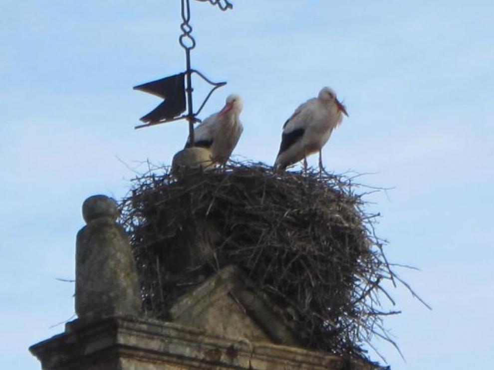 Cigüeñas en la torre de Barbastro
