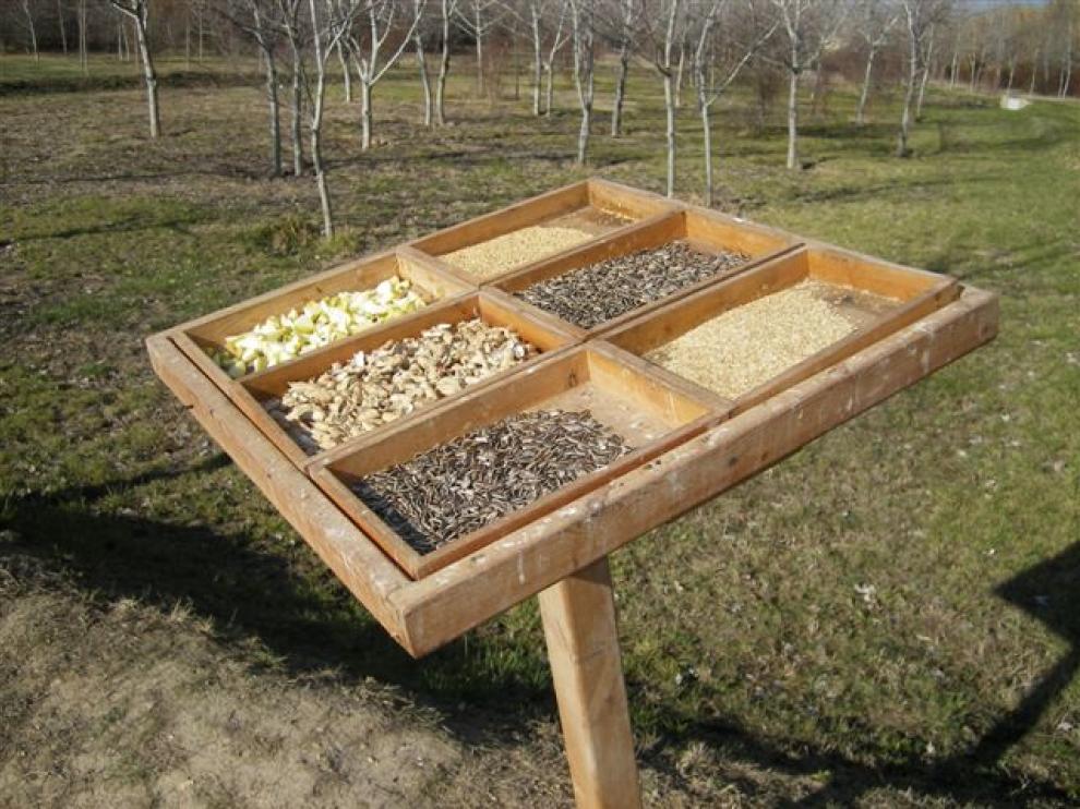 Los comederos aseguran el alimento a las aves durante el invierno en el Galacho