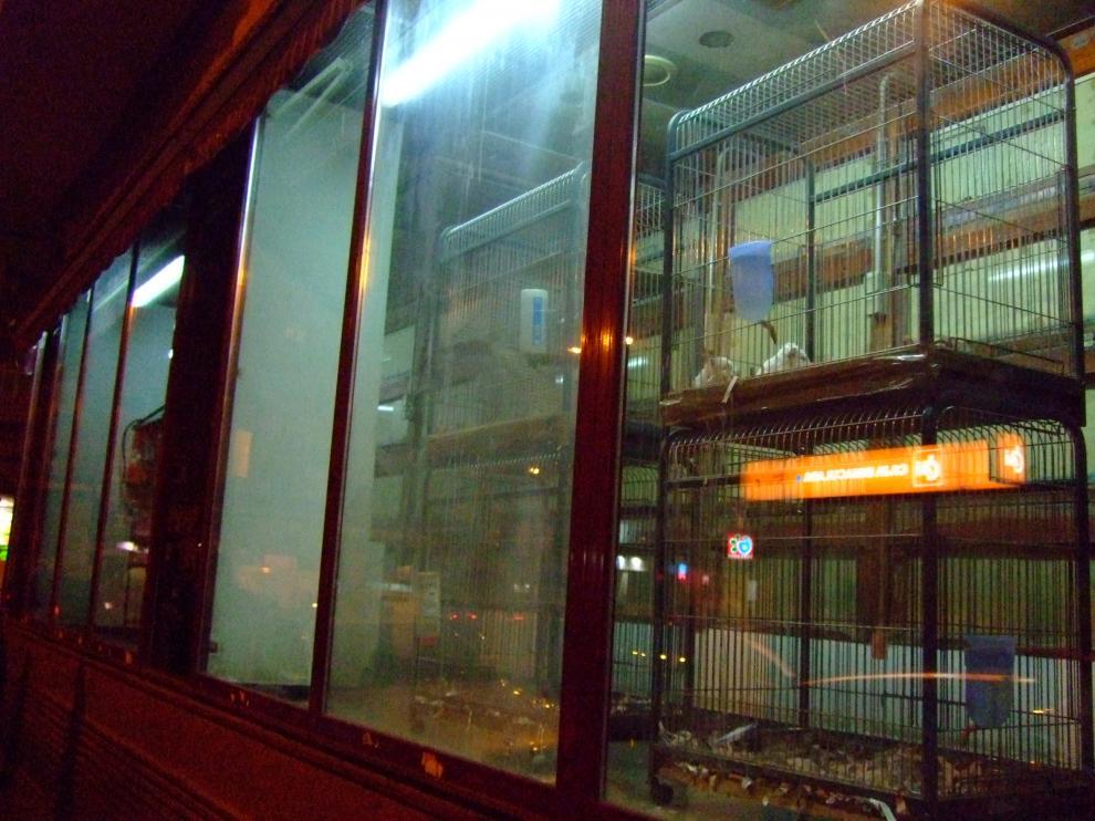 Un par de conejos enjaulados en un escaparate.