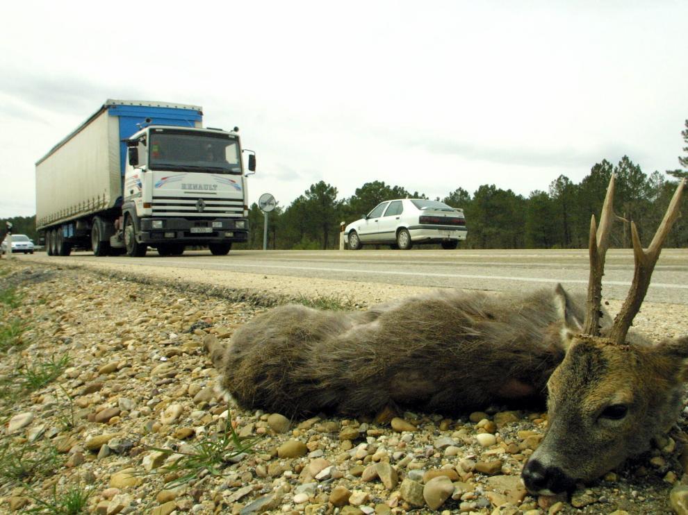 Accidente provocado por un animal en Soria