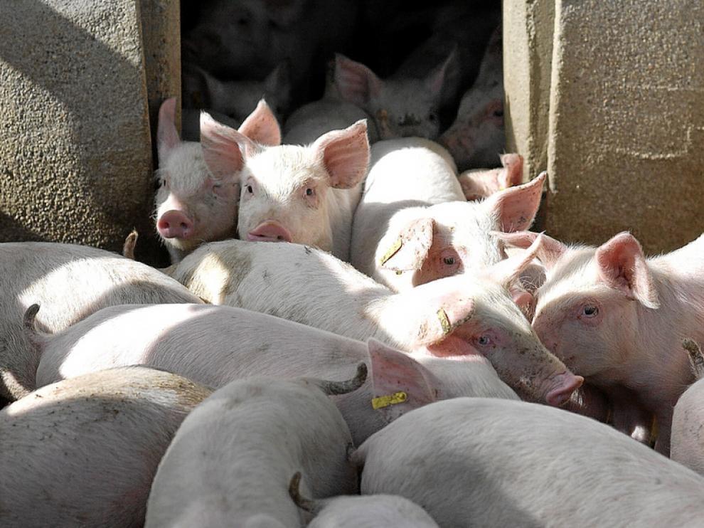 Una granja de cerdos